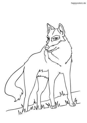 Spähender Wolf Malvorlage