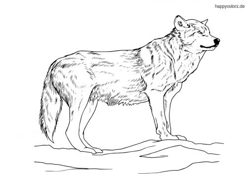Wolf Malvorlage