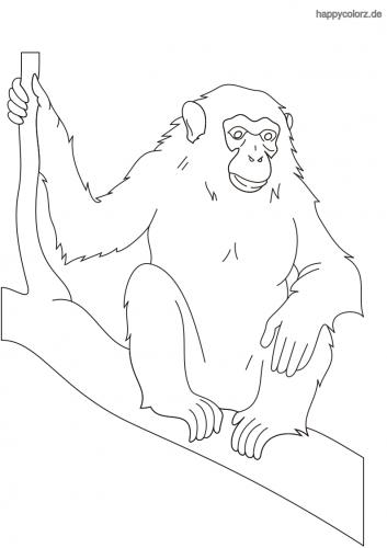 Schimpanse auf Zweig Ausmalbild