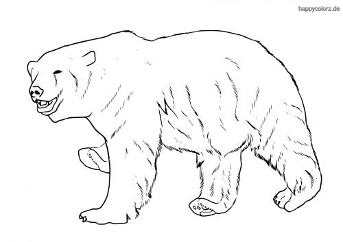 Eisbär Malvorlage
