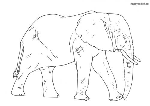 Elefant ausmalen