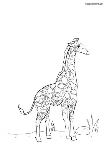 Giraffenbulle Malvorlage