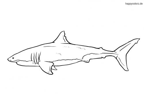 Hai mit Kiemen Ausmalbild