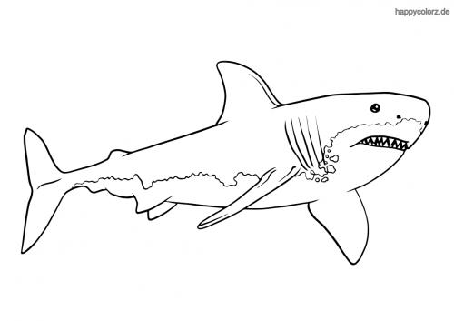 Weißer Hai Ausmalbild
