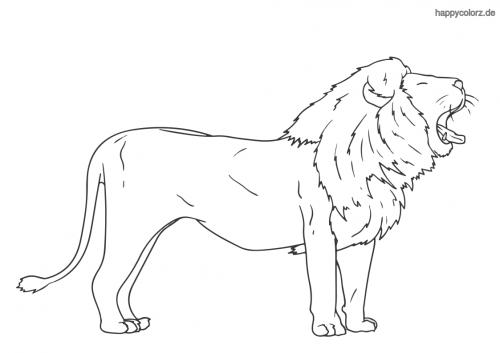 Gähnender Löwe Ausmalbild