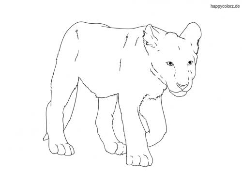 Löwenbaby ausmalen