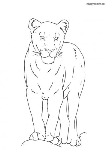 Löwin ausmalen