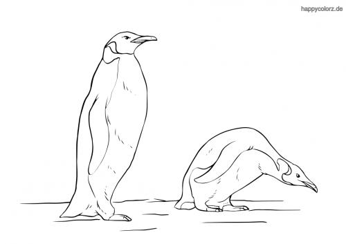 Pinguinpaar Ausmalbild