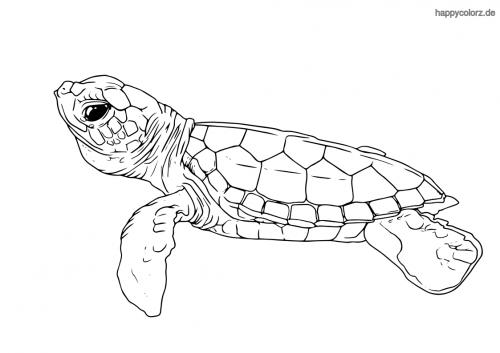 Kleine Schildkröte Ausmalbild