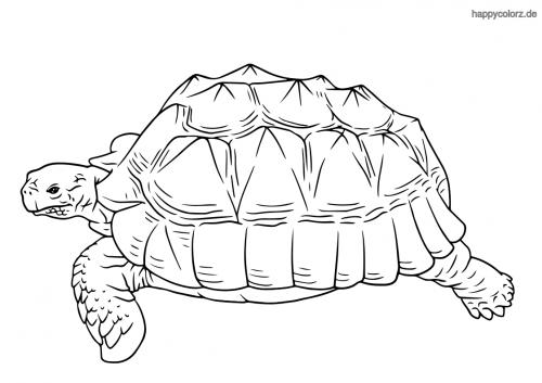 Meeresschildkröte Malvorlage