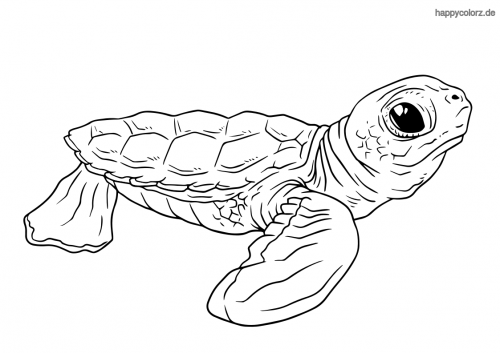 Schildkrötenbaby ausmalen
