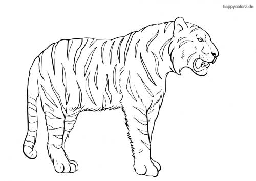 Brüllender Tiger Ausmalbild