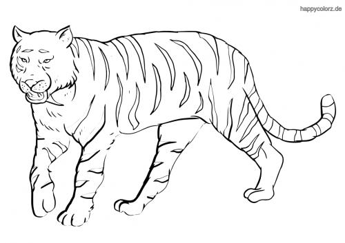 Sibirischer Tiger Ausmalbild